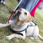 Senior Care in Mooresville NC: Would Your Dad Benefit From a Service Dog?